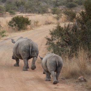 Safari Sur Mesure Afrique Lienve On Pixabay