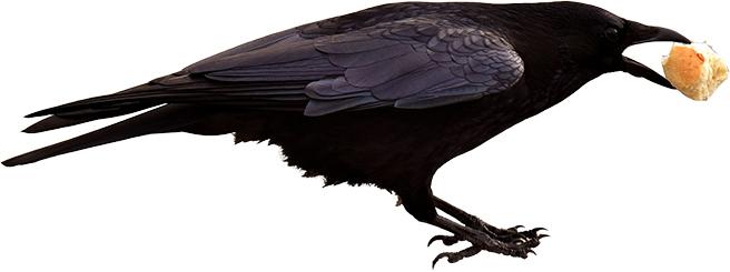 Maitre Corbeau S