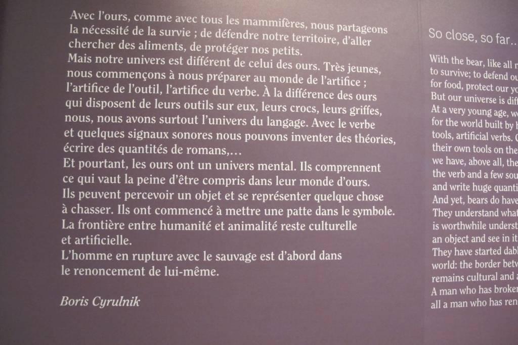 Exposition l'Ours - Muséum de Toulouse