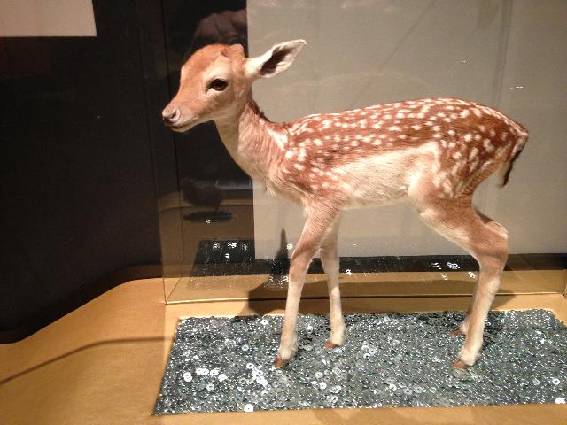 Muséum - Exposition bébés animaux