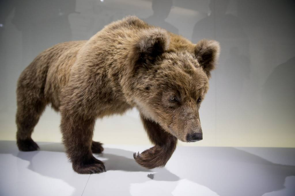 Exposition L'ours © Patrice Nin