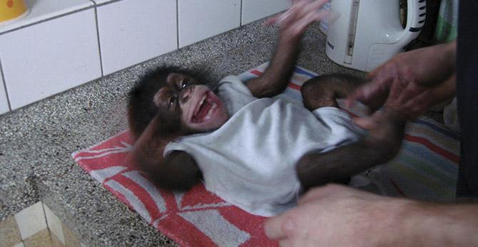 Histoire naturelle du rire